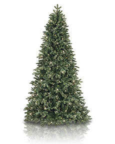 Fraser Fir <span>|5.5' | Full 41"