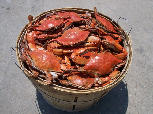 Steamed CrabsMaryland Blue Crabs
