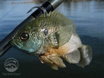 Mattlures U2 Bluegill Boot Tail