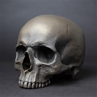 Full size Human Skull Maxilla in Darkened Bronze.