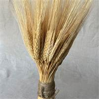 Triticum Wheat Stack Natural Small