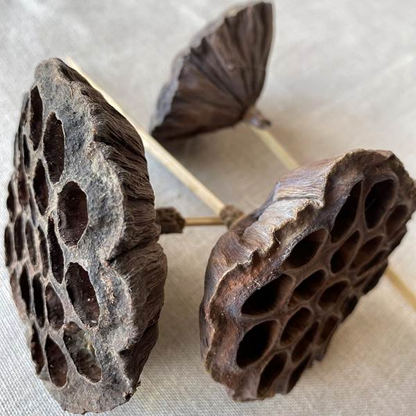 Lotus Pod Natural Pick, Dried Pod