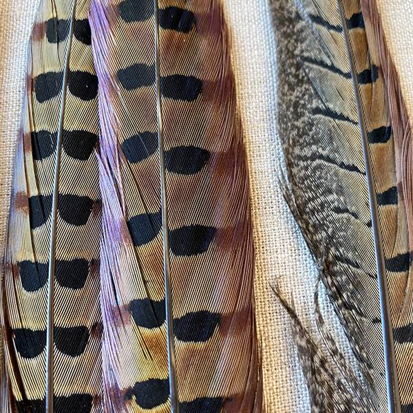 Ringneck Pheasant Feathers 16-18 Inches