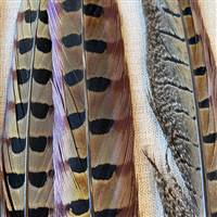 Ringneck Pheasant Feathers 20-22 Inches