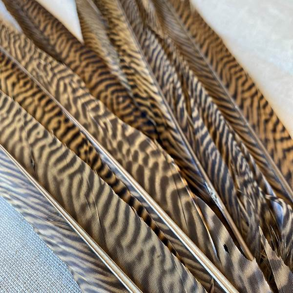 Golden Pheasant Feather 18-20""