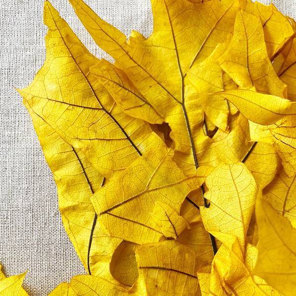 Transparent Oak Yellow 1 lb
