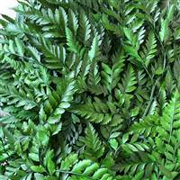 Leatherleaf Green