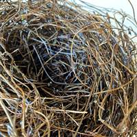 Bird's Nest Natural