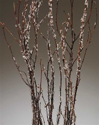 Birch Branches Iced