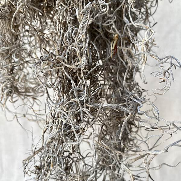 Spanish Moss Natural Bag