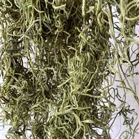 Spanish Moss Light Green Bag