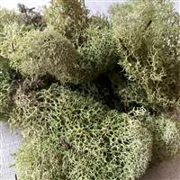 Reindeer Moss Light Green 3lb bulk