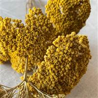 Yarrow Natural