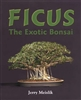Ficus:The Exotic Bonsai