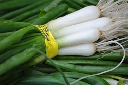 Green Spring Onions - 1 bunch