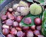 chestnuts, gluten-free, local, north carolina grown, dunstan tree, american chestnut
