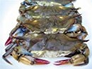 Softshell Crabs, Cleaned, Frozen ~ 4ea