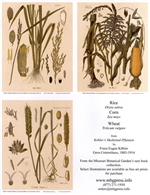 Notecards, Rare Book Print Set - Cereals
