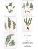 Notecards, Rare Book Print Set - Ferns