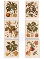 Notecards, Rare Book Print Set - Edible Fruits