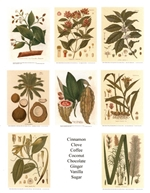Notecards, Rare Book Print Set - Gourmet Ingredients