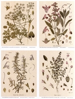 Notecards, Rare Book Print Set - Culinary Herbs
