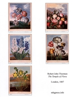 Notecards, Rare Book Print Set - Thornton's Temple of Flora