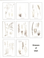 Notecards, Grasses of Utah, The Grass Manual