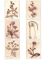 Notecards, Rare Book Print Set - Woodville Herbs
