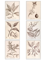 Notecards, Rare Book Print Set - Woodville Trees