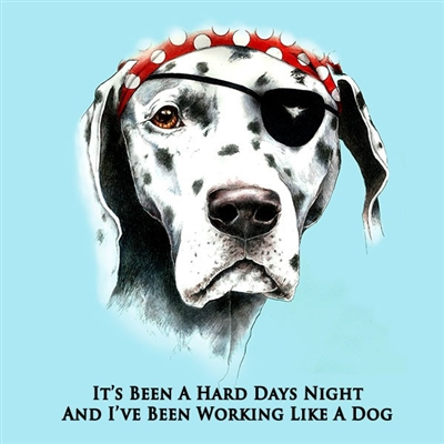 Sea Dog Hard Days Night in Sky Blue
