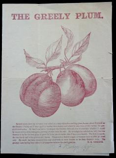 The Greely Plum, printed in plum colored ink.. ..