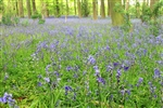 The Magic Bluebell Grove Storytelling Workshop