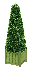 "Luke 45"" Pyramid Botanical in Boxwood"