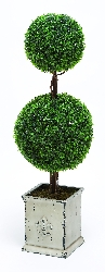 "William 43"" Double Balls Botanical in Boxwood"