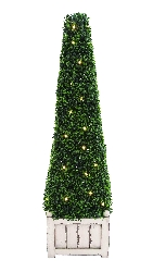 Evelyn Boxwood Pyramid Plant with Lights
