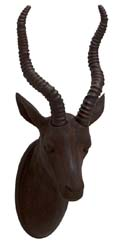 Siri Antelope Trophy Head