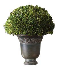 Uttermost 60092 Globe Preserved Boxwood