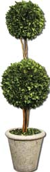 Uttermost 60106 Two Sphere Topiary Preserved Boxwood