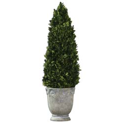 Uttermost 60111 Boxwood Cone Topiary