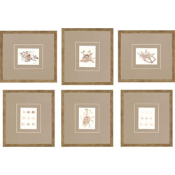 Nests Pk/6 Wall Art