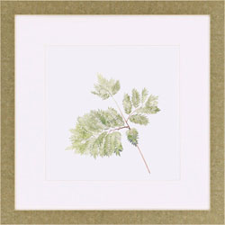 Watercolor Leaf Study II Wall Art