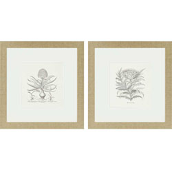 Hyacinthus/Cinera Pk/2 Wall Art