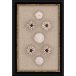 Sea Urchin Sputnik Wall Art
