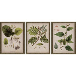 Plants I Pk/3 Wall Art