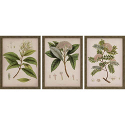 Plants II Pk/3 Wall Art
