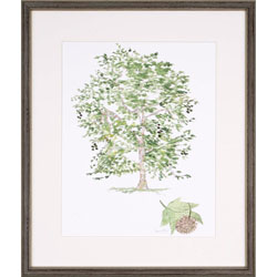 Sycamore Tree Wall Art