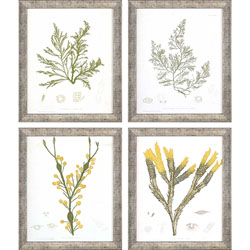Seaweed II Pk/4 Wall Art