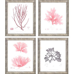 Seaweed IV Pk/4 Wall Art