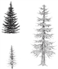 3 Pine Tree Set - 689690694SO
